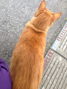 近所の猫の後ろ姿